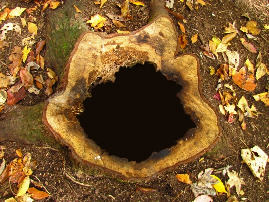 A tree stump with a black center.