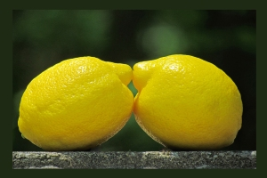 Lemon Lovers 1