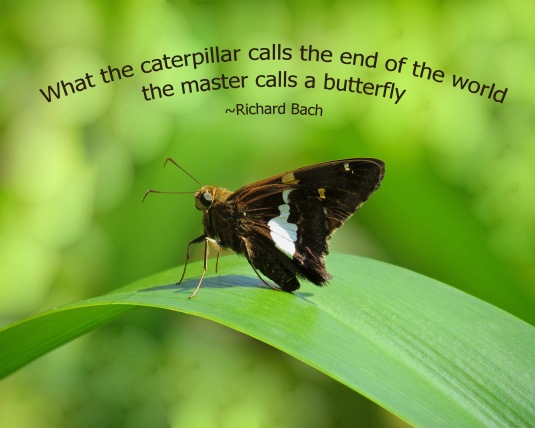Butterfly and quote about butterflies.