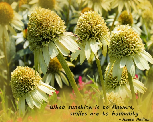 Yellow flowers and a quote about sunshine and smiles.