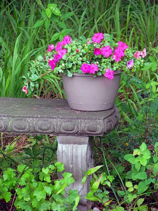 A pot on flowers on a stone bench