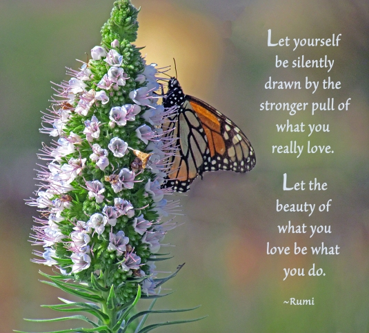 Butterfly on a flower with quote from Rumi