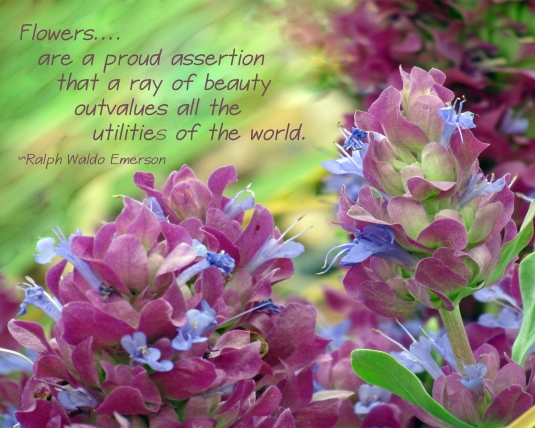 Quote about flowers.