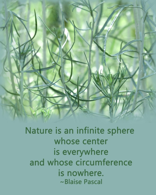 Nature photography with a quote about nature