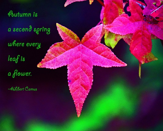 Red fall leaf and a quote about autum by Albert Camus.