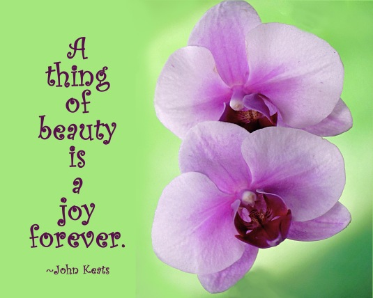 Orchids and a quote about beauty.