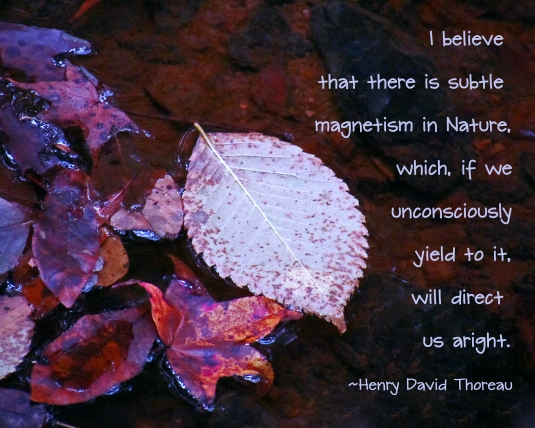 Nature quote by Henry David Thoreau