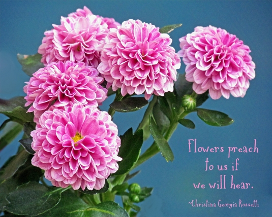 Pink mums and a flower quote.