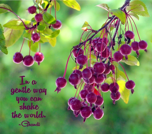 Ghandi quote: in a gentle way you can shake the world.