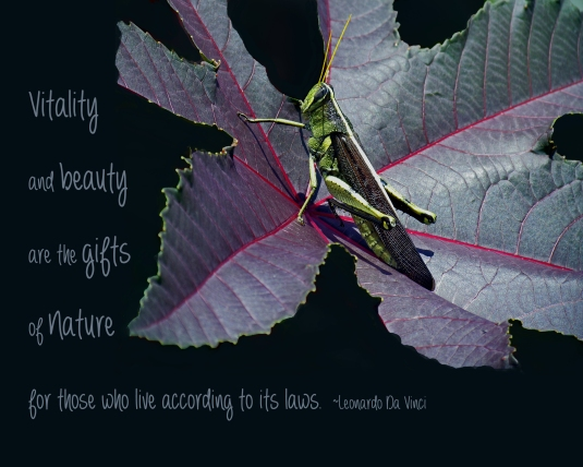 Nature quote by Leonardo Da Vinci.
