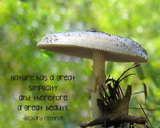 Inspirational quote about nature.