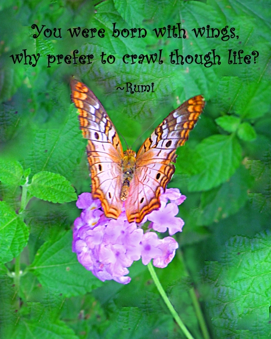 Rumi quote about flying through life instead of crawling.