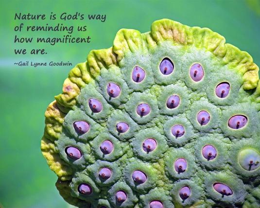 Nature quote.