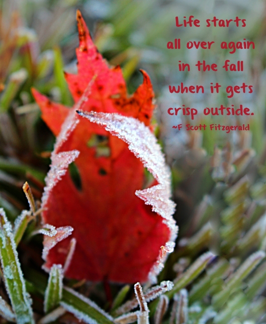 Fall quote by F. Scott Fitzgerals