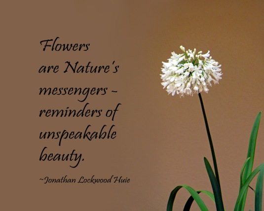 Nature quote about flowers.
