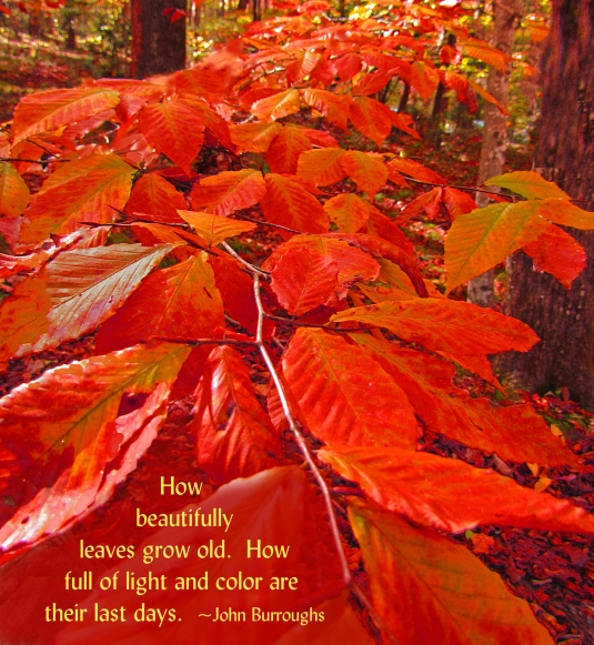 Nature quote about fall leaves.