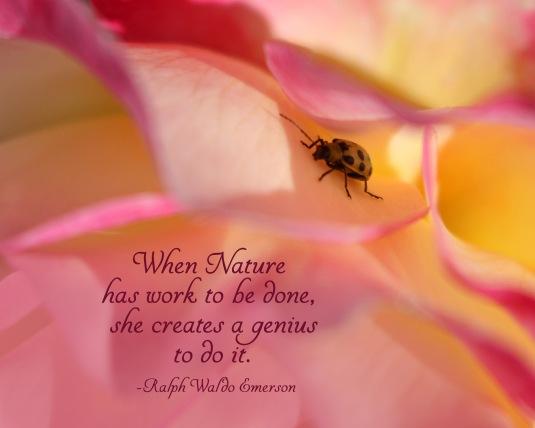 Ralph Waldo Emerson nature quote
