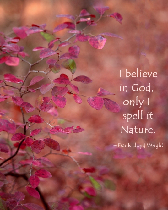 Frank Lloy Wright nature quote