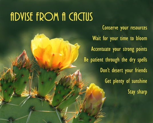 Advise from a Cactus