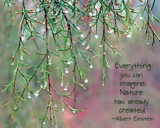 Albert Einstein nature quote.