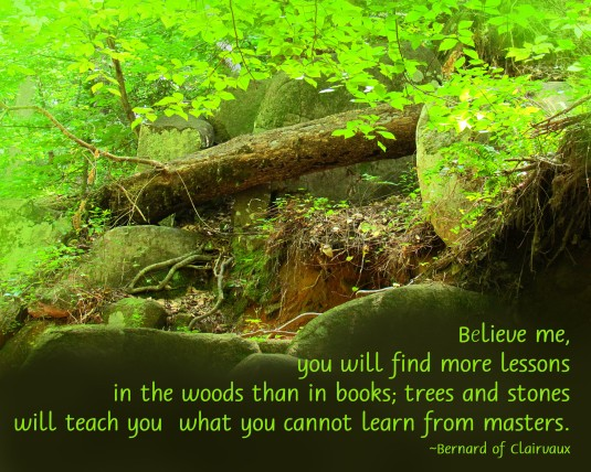 Nature quote about the woods.