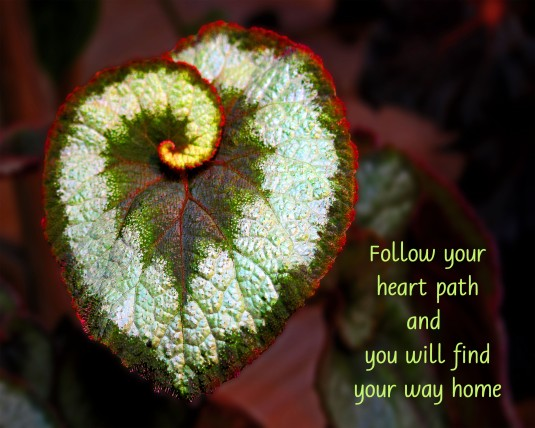 Inspirational quote about following your heart.