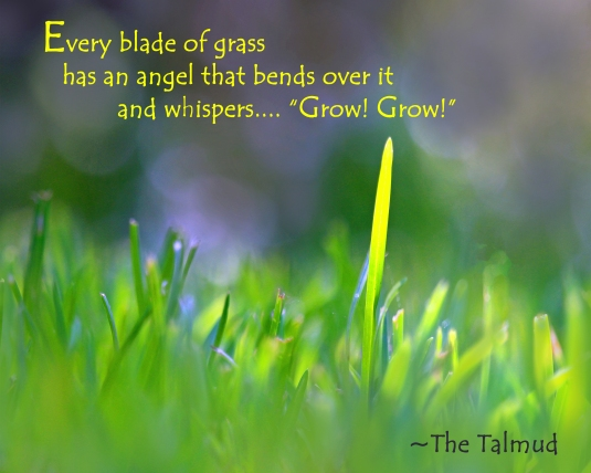 Nature quote from The Talmud