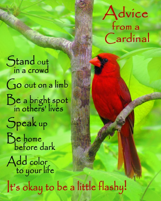 Advice from a cardinal.