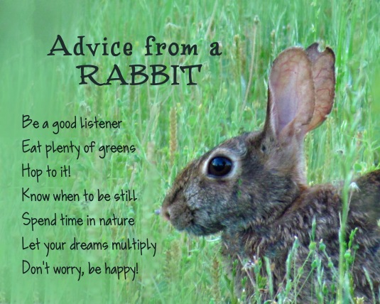 Advice from a rabbit.