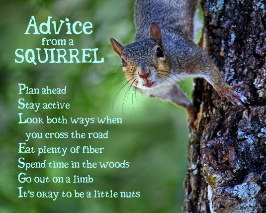 Advice From a Squirrel