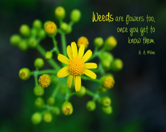 Nature quote about weeds from A. A. Milne