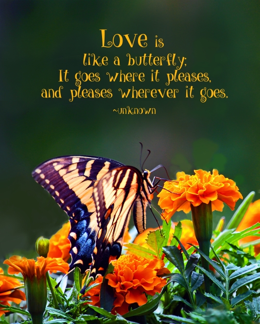 Inspirational quote about love being like a butterfly.