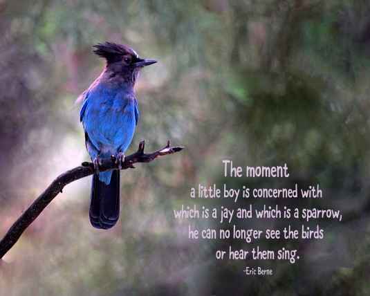 Nature quote about bluejays and birds.