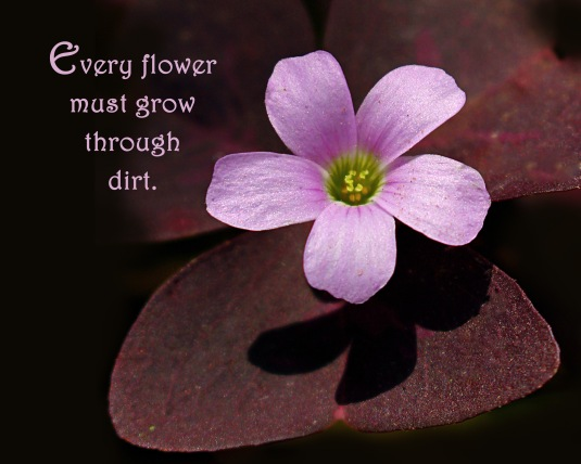 Nature quote about flowers