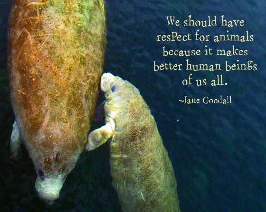 Nature quote by Jane Goodall