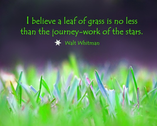 Walt Whitman nature quote about a leaf of grass.