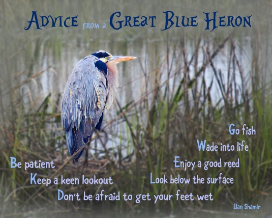 Advice from a Great Blue Heron