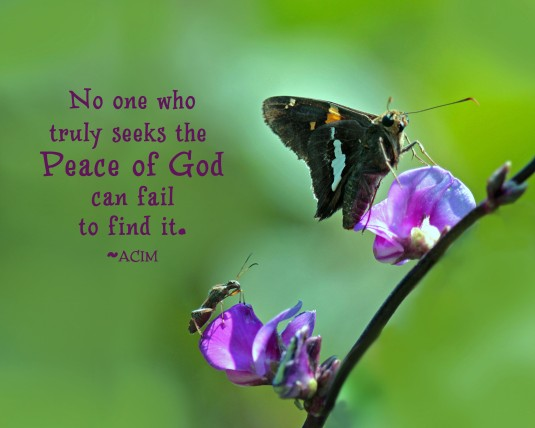 ACIM quote about seeking peace.