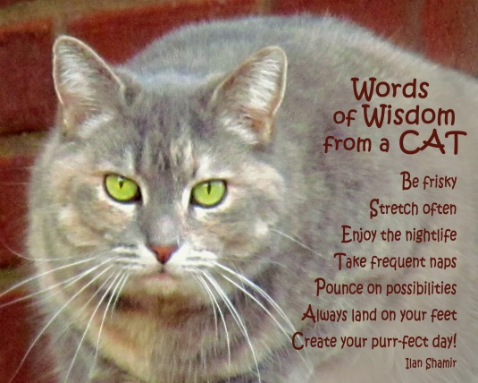 Words of Wisdom from a Cat