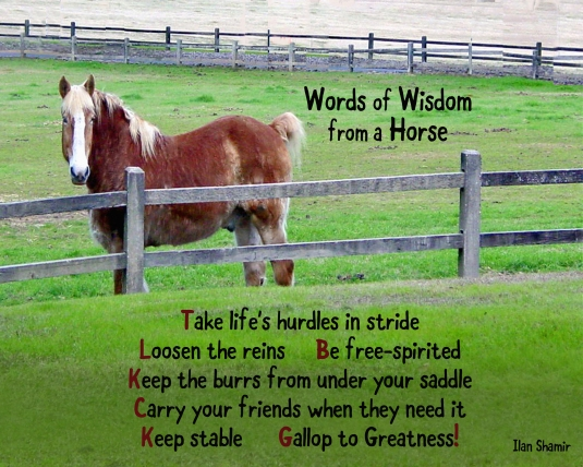 Words of Wisdom from a Horse.