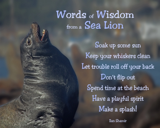 Words of Wisdom from a Sea Lion
