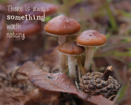 There is always something worth noticing.