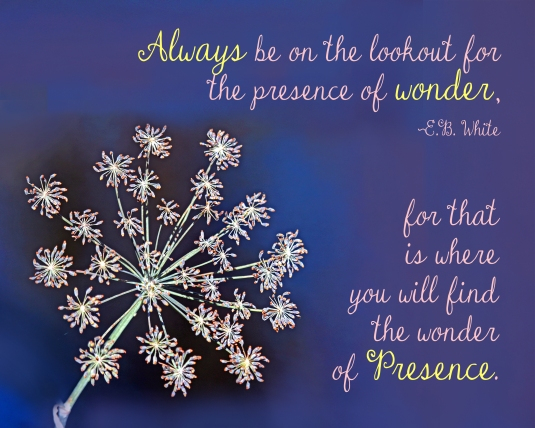 Mindfulness quote about wonder and Presence.