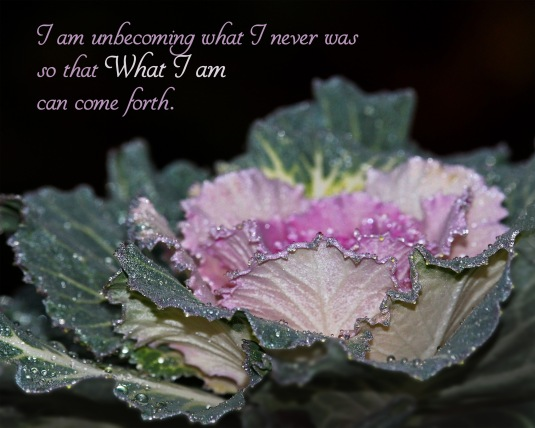 Mindfulness quote about being who you really are.