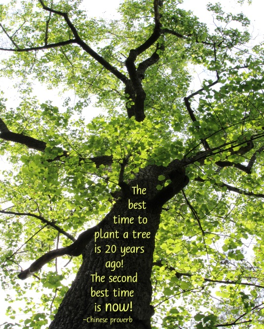 Chinese Proverb about planting trees.