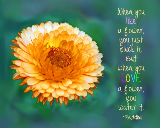 A Buddha nature quote about loving  flowers.