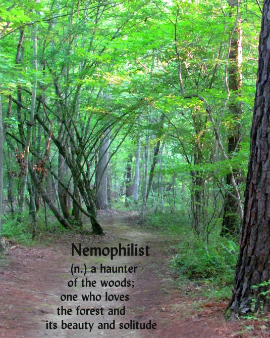 nemophilist (n). haunter of woods; lover of forests.