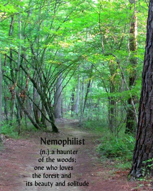 nemophilist (n). haunter of woods; lover of forests.
