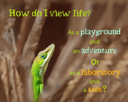 An mindfulness question about how I view life.