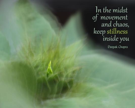Deepak Chopra quote about the stillness within.